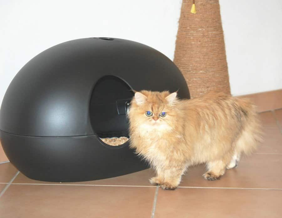 Beste Kattenbak Kopen