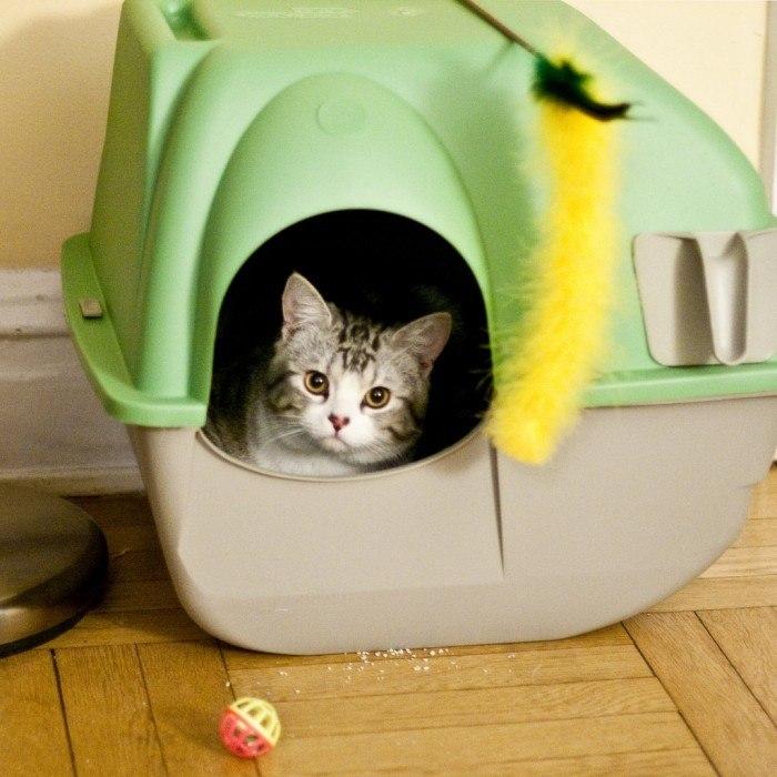 Kattenbak Kopen tips